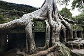 Ta Prohm (Tomb raider temple) at Angkor, Cambodia. UNESCO World Heritage Site.