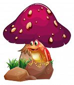 picture of orange poison frog  - Illustration of a frog below the giant mushroom on a white background  - JPG