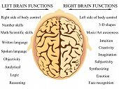 stock photo of right brain  - vector illustration of the brain - JPG
