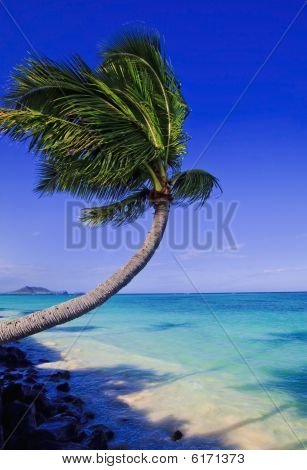 palm tree over the ocean