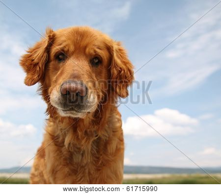 a dog enjoying the outdoors on a beautiful summer day