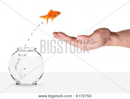 Goldfish Jumping Out Of Fishbowl And Into Human Palm