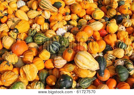 Background photo of fresh gourds, squashes, and Pumpkins