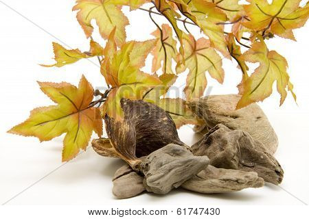 Root with nutshells and autumn branch