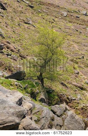 Tree Growing From Rocky Outcrop