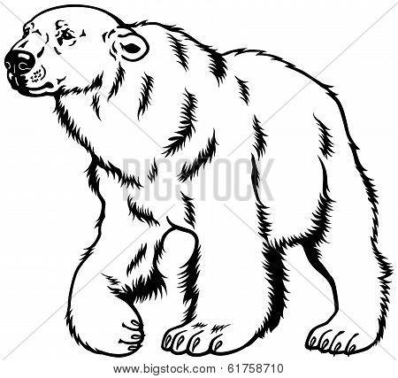 polar bear black white
