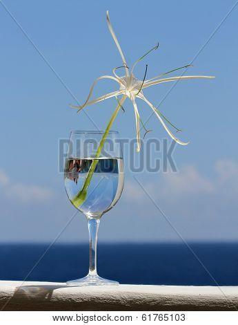 Elegant White Spider Lily in Wine Glass