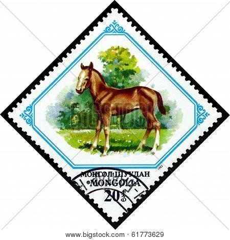 Vintage  Postage Stamp. Colt.
