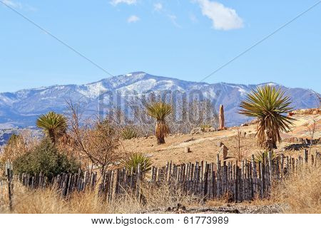 Spiky green shrubs in front of a mountain