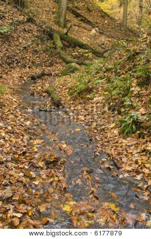 Stream In State Park