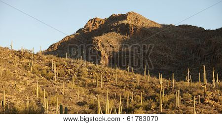 panorama of sonoran desert in Arizona, USA