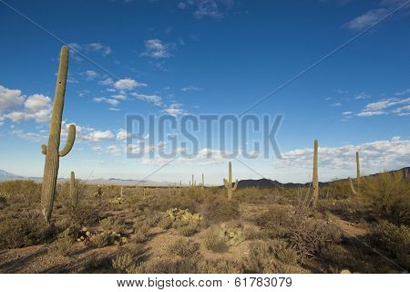 sonoran desert at dawn near Tucson, Arizona