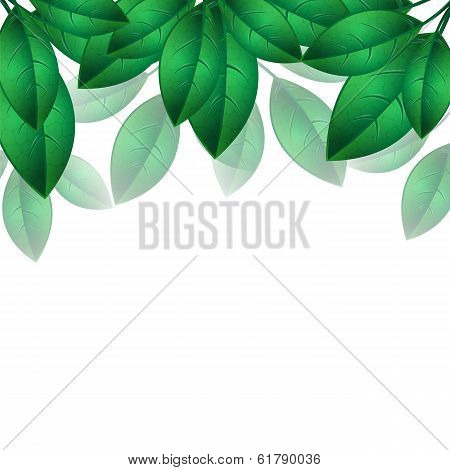 Green Spring Leaves Isolated On White Background