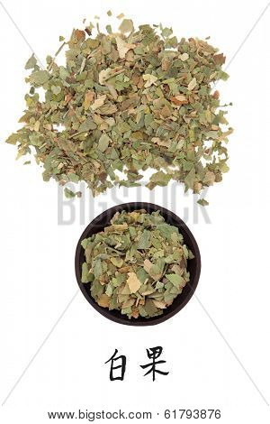 Ginkgo leaf chinese herbal medicine with mandarin script title translation. Yin xing.