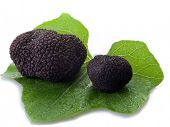 picture of truffle  - black truffle over leaf on white background - JPG