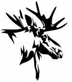picture of bull head  - moose or elk  - JPG