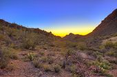 stock photo of ocotillo  - sunrise over the sonoran desert in arizona - JPG
