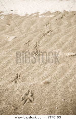 Bird Tracks In  Winter Sand