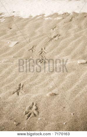 Bird Tracks In  Winter Sand