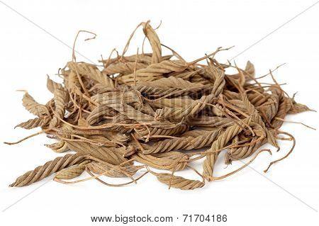 Helicteres Isora (Marod Phali (hindi))