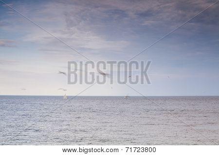Sea, Seagulls And Sailboat.