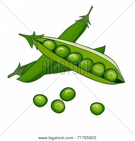 Peas vector on white