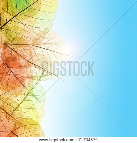 Autumn composition with transparent Leaves and blue sky background