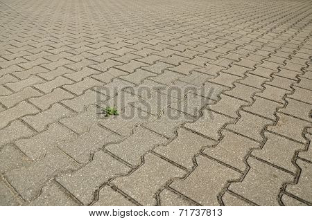 Paving slabs and a plantain.