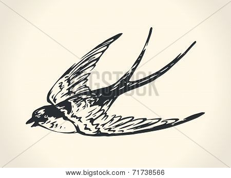 Vintage illustration of swallow