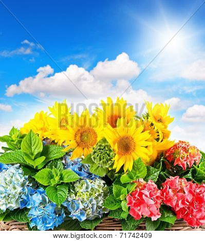 Colorful Sunflowers And Hortensia Blossoms