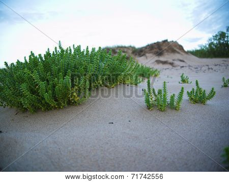 Beach With Sand Dunes
