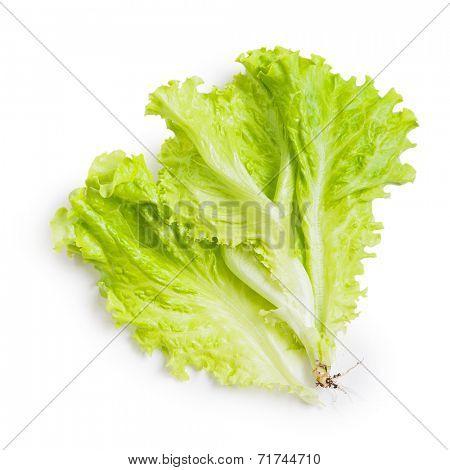Fresh green lettuce leaf isolated on white background