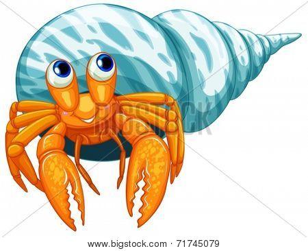 Illustration of a closeup hermit crab