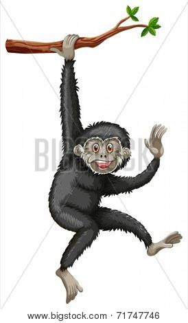 Illustration of a gibbon hanging from a branch