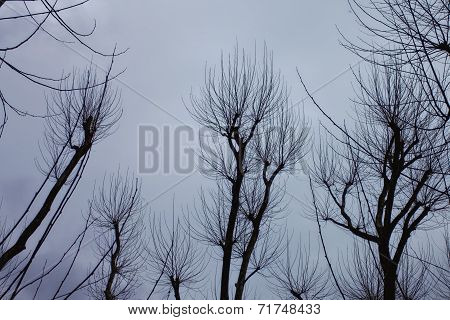 Naked Branches Of A Tree Against Blue Sky