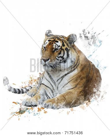 Watercolor Digital Painting Of Tiger
