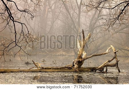 Forest lake with mist
