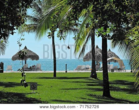 Palm trees at a vacation resort