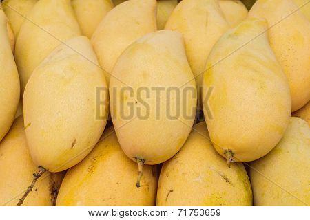 Yellow Mango, Barracuda Mango