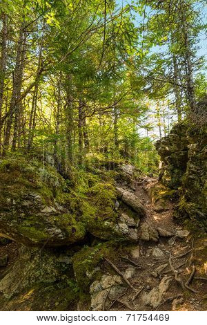 Laverty Falls Trail Path