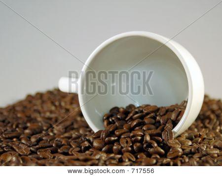 Bean_Cup