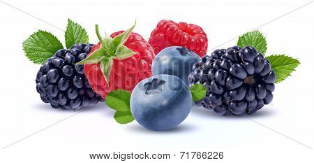 Forest Berries Composition Isolated On White Background