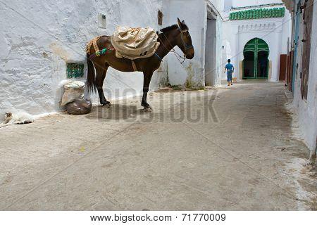 Mule Of Tetouan, Morocco