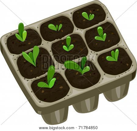 Illustration Featuring a Seedling Tray Filled with Saplings