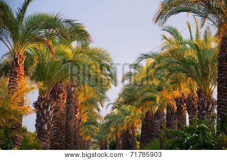 Tropical Gardens Of Finik Palms