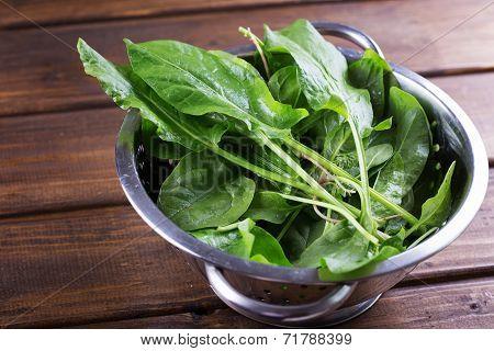 Fresh Organic Sorrel