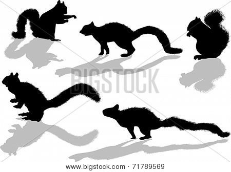 illustration with five squirrels isolated on white background
