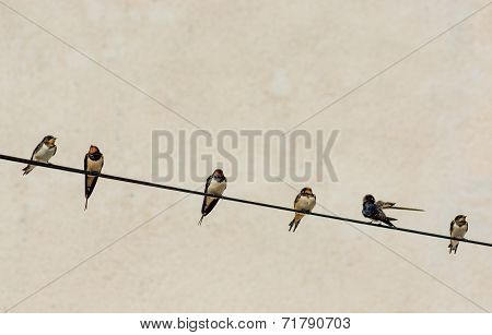 Numerous Swallows Sitting on Wire