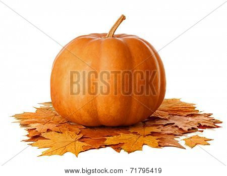 Pumpkin with dry  autumn leaves on white background