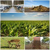 stock photo of fertilizer  - Collection of images of fertilizing field with natural manure - JPG